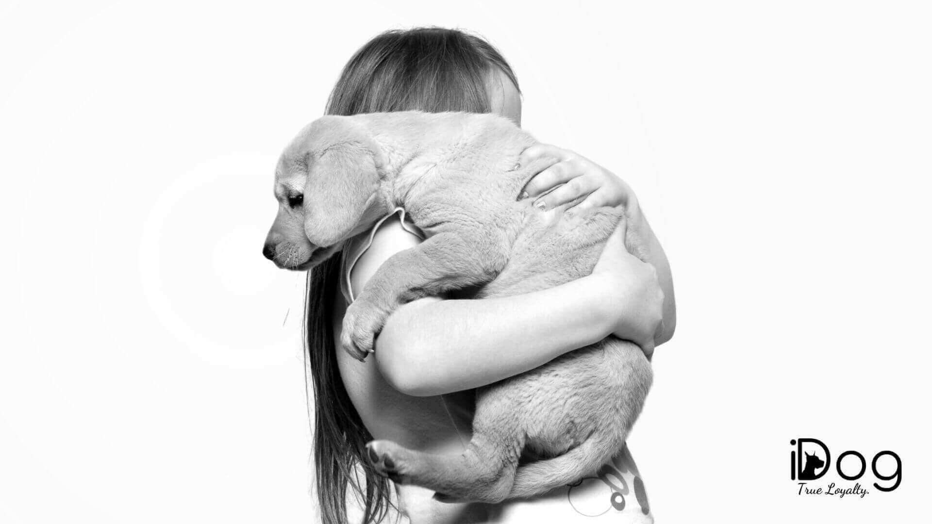 idog.ro - site web cu informatii si poze cu caini
